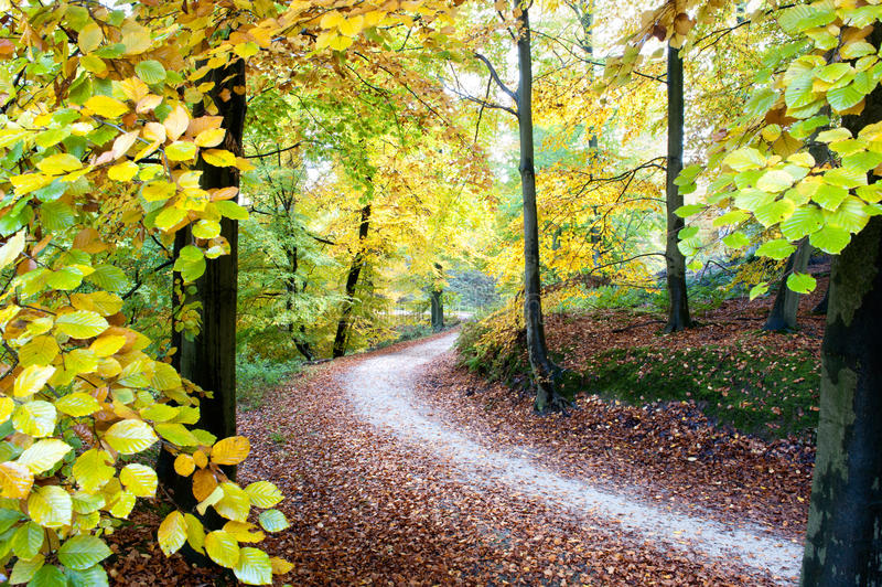 Download Golden fall stock image. Image of environment, nature - 17324359