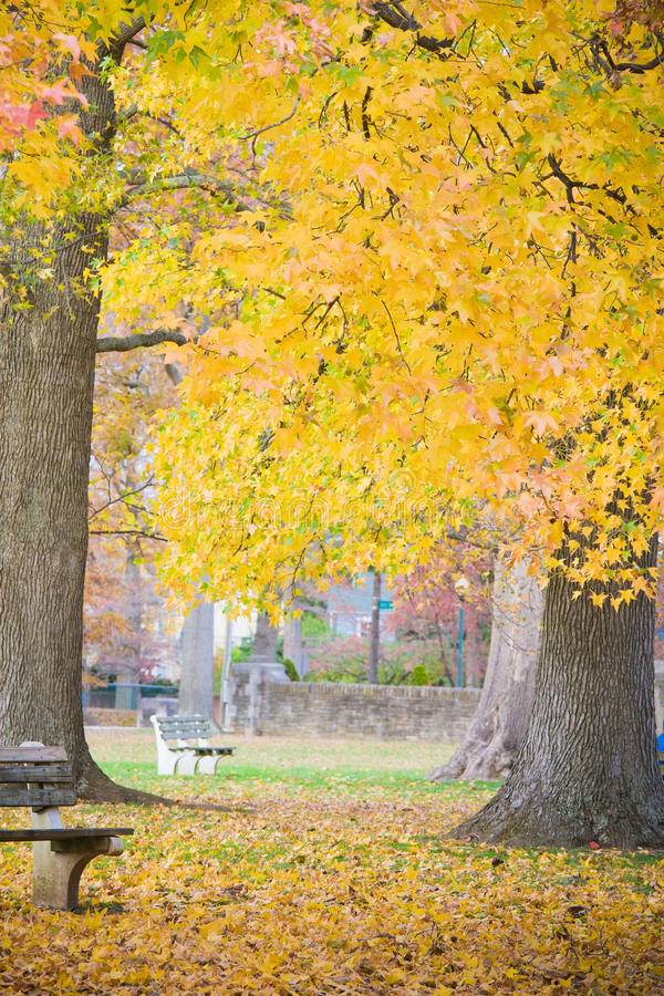 Golden Fall Leaves in the Park. A line of trees displaying Autumn colors in Ritter Park, one of the United States top ten city parks located in Huntington, West royalty free stock photos