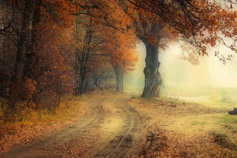 Golden Fall season forest royalty free stock images