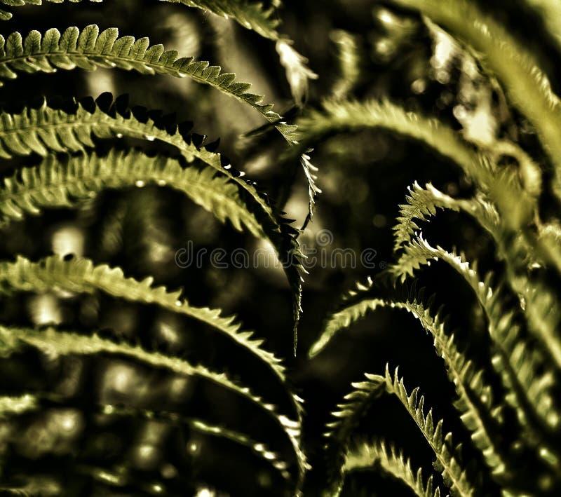 Golden ferns stock photo