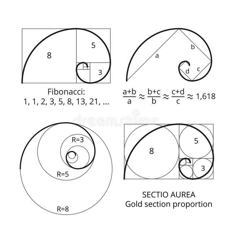 Golden fibonacci ratio spirals. Gold section proportion vector visualization. Spiral proportion golden section illustration royalty free illustration