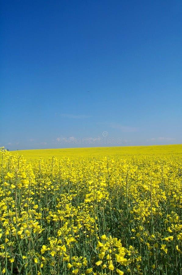 Free Golden Field Stock Image - 511