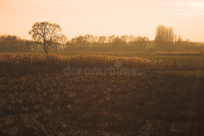 Golden field stock photo
