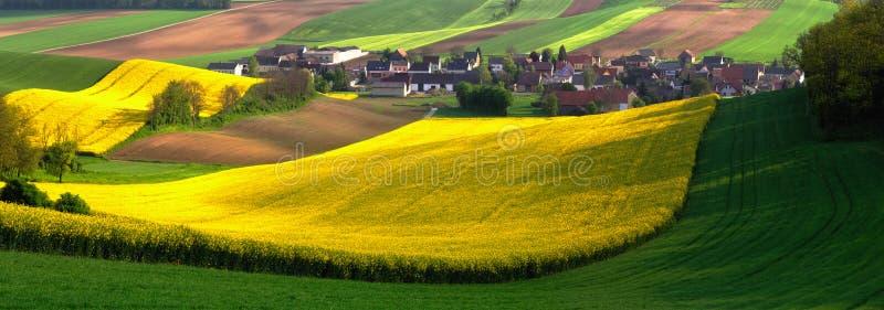 Golden fields. Bright summer day stock photos