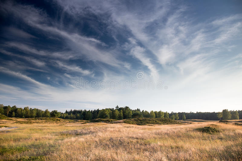 Golden fields. Of Heidestein Zeist (the Netherlands stock image