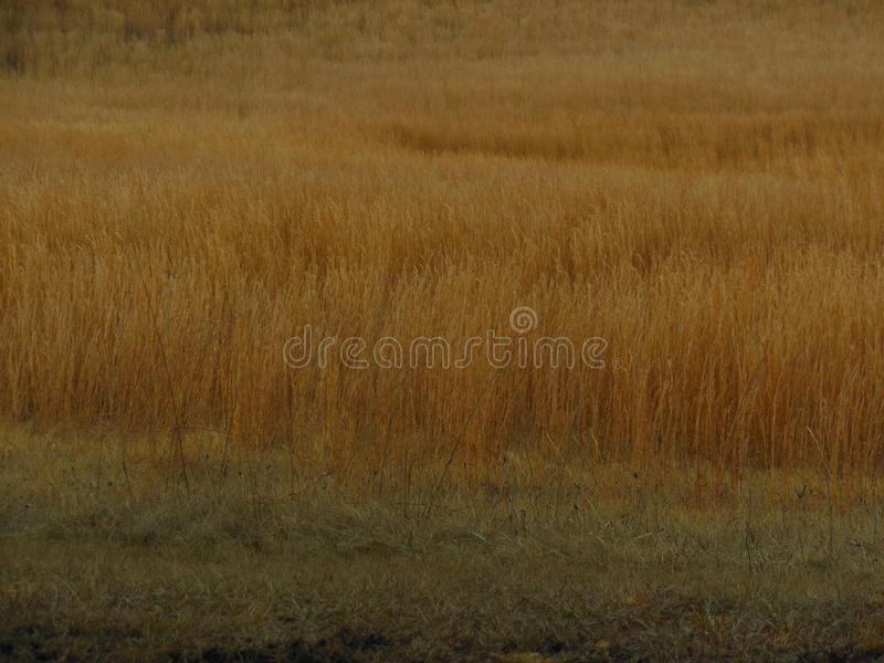 Golden Fields and Meadows. The golden fields and meadows of Harper`s Ferry, West Virginia. Located in the Eastern part of the United States of America royalty free stock photos