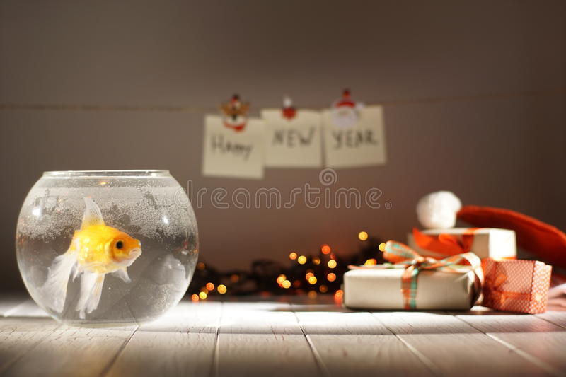 The golden fish in the circular aquarium at the blurred background of Christmas gifts, glowing garlands and new year. Signs stock photos
