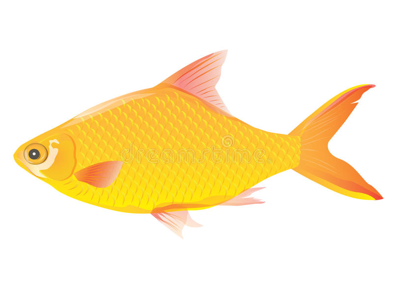 Golden fish royalty free illustration
