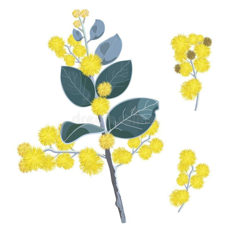 Free Golden Flowering Wattle Tree Flowers Royalty Free Stock Image - 107707216