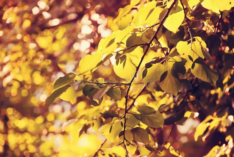 Golden foliage stock images