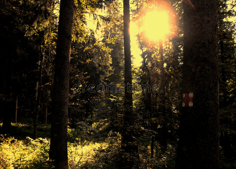 Golden forest stock image