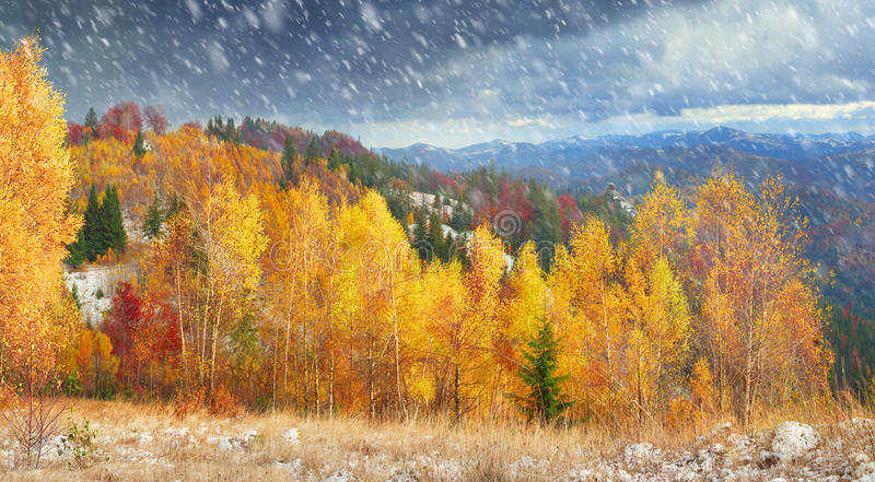 Golden Forest Ridge Sokilsky royalty free stock image
