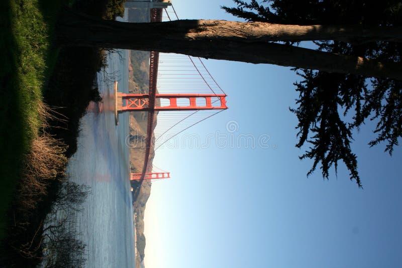 Golden Gate Bridge behind tree stock photo