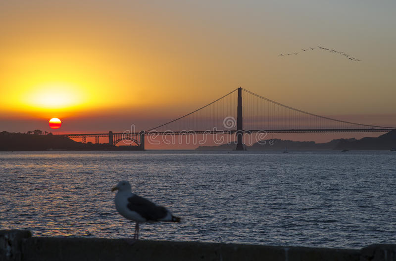 The Golden Gate Bridge in California and seagull. The Golden Gate Bridge in California at sunset and seagull royalty free stock photography