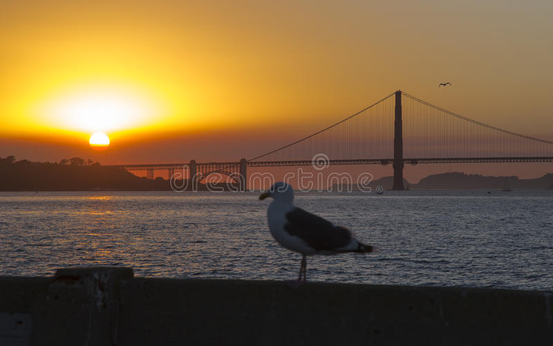 The Golden Gate Bridge in California and seagull. The Golden Gate Bridge in California at sunset and seagull stock photography