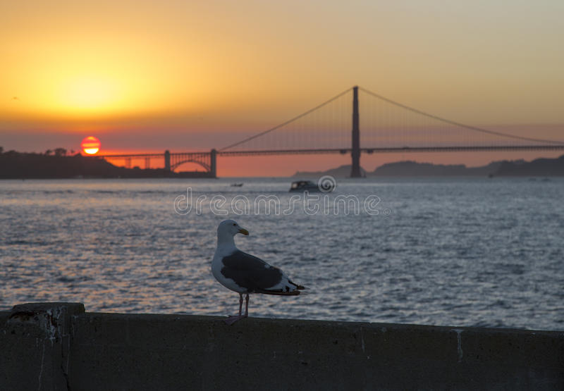 The Golden Gate Bridge in California and seagull. The Golden Gate Bridge in California at sunset and seagull royalty free stock photos