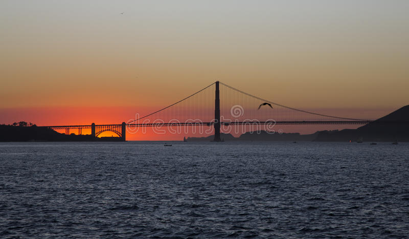 The Golden Gate Bridge in California and seagull. The Golden Gate Bridge in California at sunset and seagull royalty free stock image