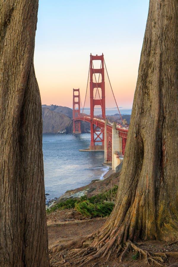 Golden Gate Bridge Through Cypress Trees. stock images
