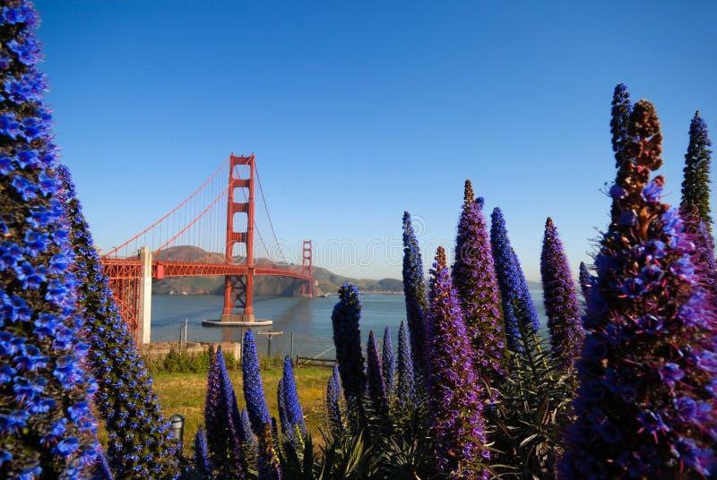 Golden gate bridge and flowers stock photo
