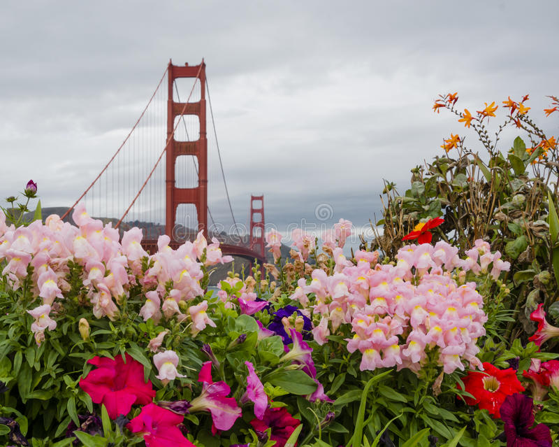 Golden Gate Bridge and flowers royalty free stock images