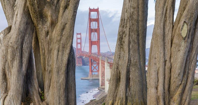 Golden Gate Bridge framed by Cypress Trees stock photo