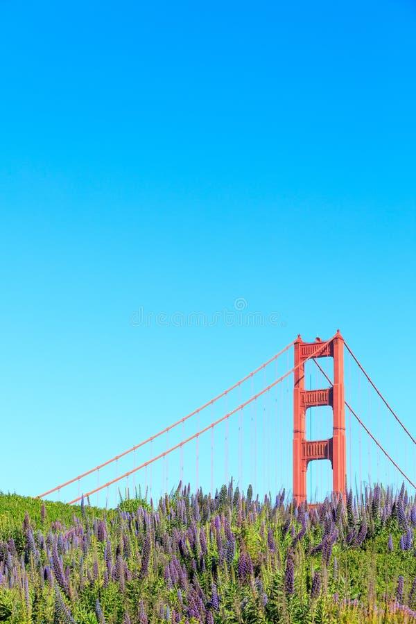 Golden gate bridge i lupinus zdjęcie stock