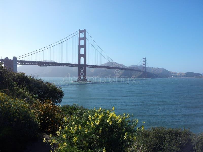 Golden gate bridge Krissy Park royaltyfri fotografi