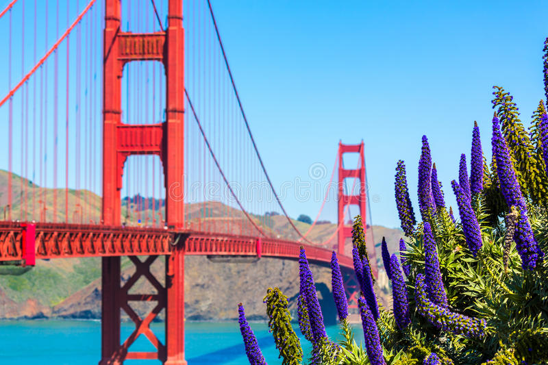 Golden Gate Bridge San Fransisco purpura kwitnie Kalifornia fotografia royalty free