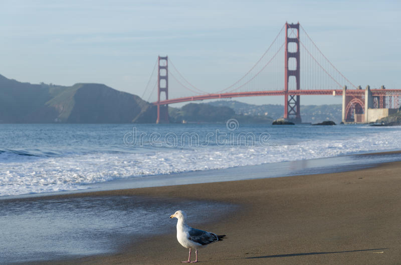 Golden Gate Bridge and the Seagull. The Golden Gate Bridge is a suspension bridge spanning the Golden Gate strait, the mile-wide, three-mile-long channel between stock images
