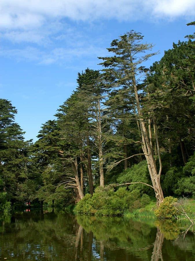 Golden Gate Park Stow Lake royalty free stock photo