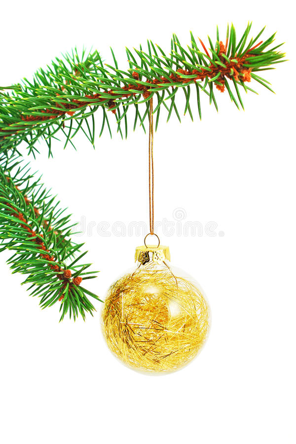 Golden glitter Christmas bauble on a spruce branch royalty free stock image