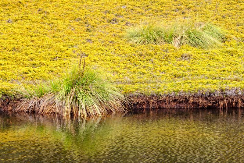 King Billy Track - Cradle Mountain royalty free stock photo