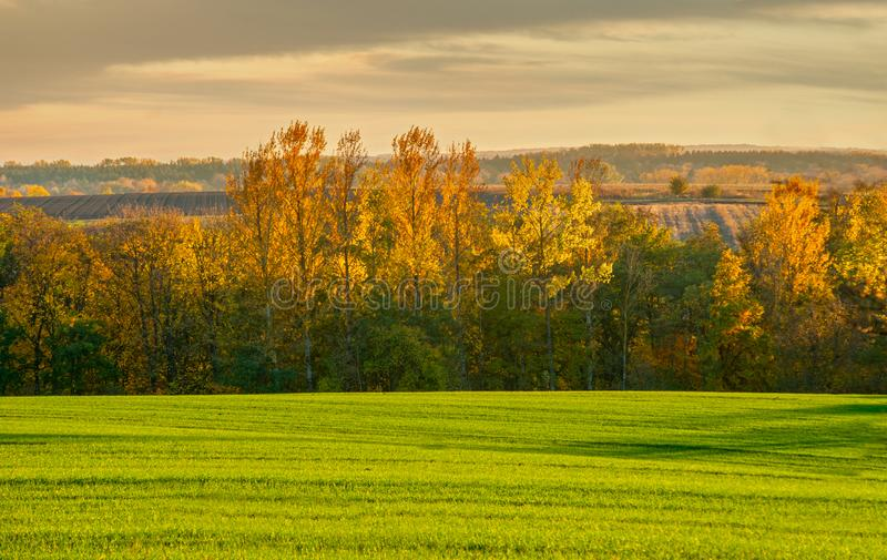 Golden glow of sunset in a colorful trees with yellow leaves and green field. Illuminated by the golden glow of sunset in a colorful trees with yellow leaves and stock image