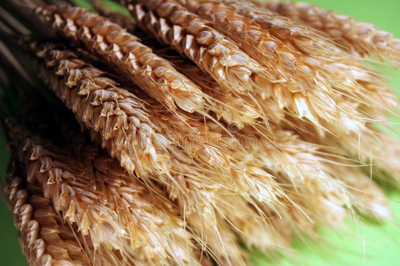 Golden grain stock images