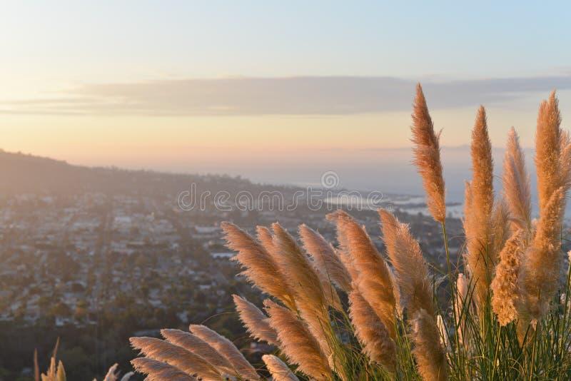 Golden Grasses On Hillside Free Public Domain Cc0 Image