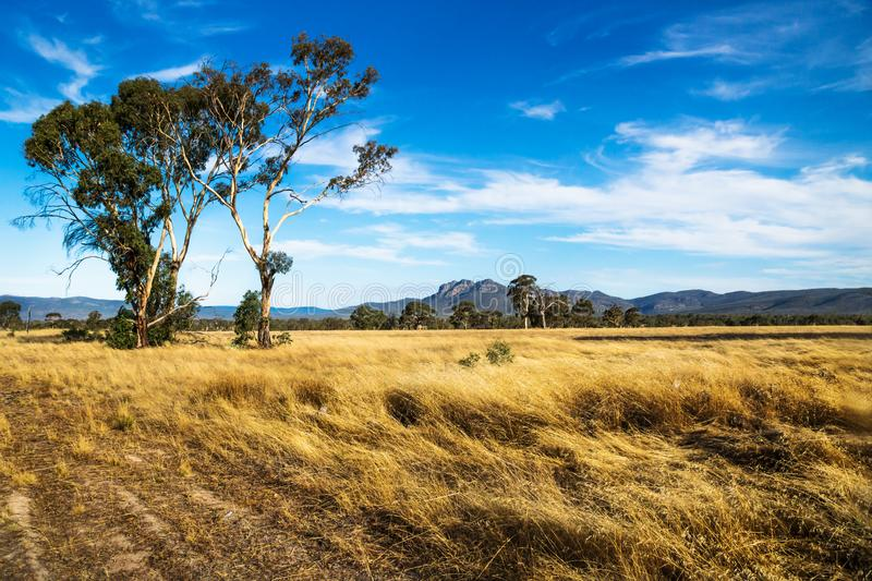 Golden grassland landscape in the bush with Grampians mountains in the background, Victoria, Australia royalty free stock image