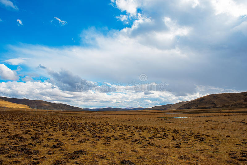 Golden grassland. stock photos