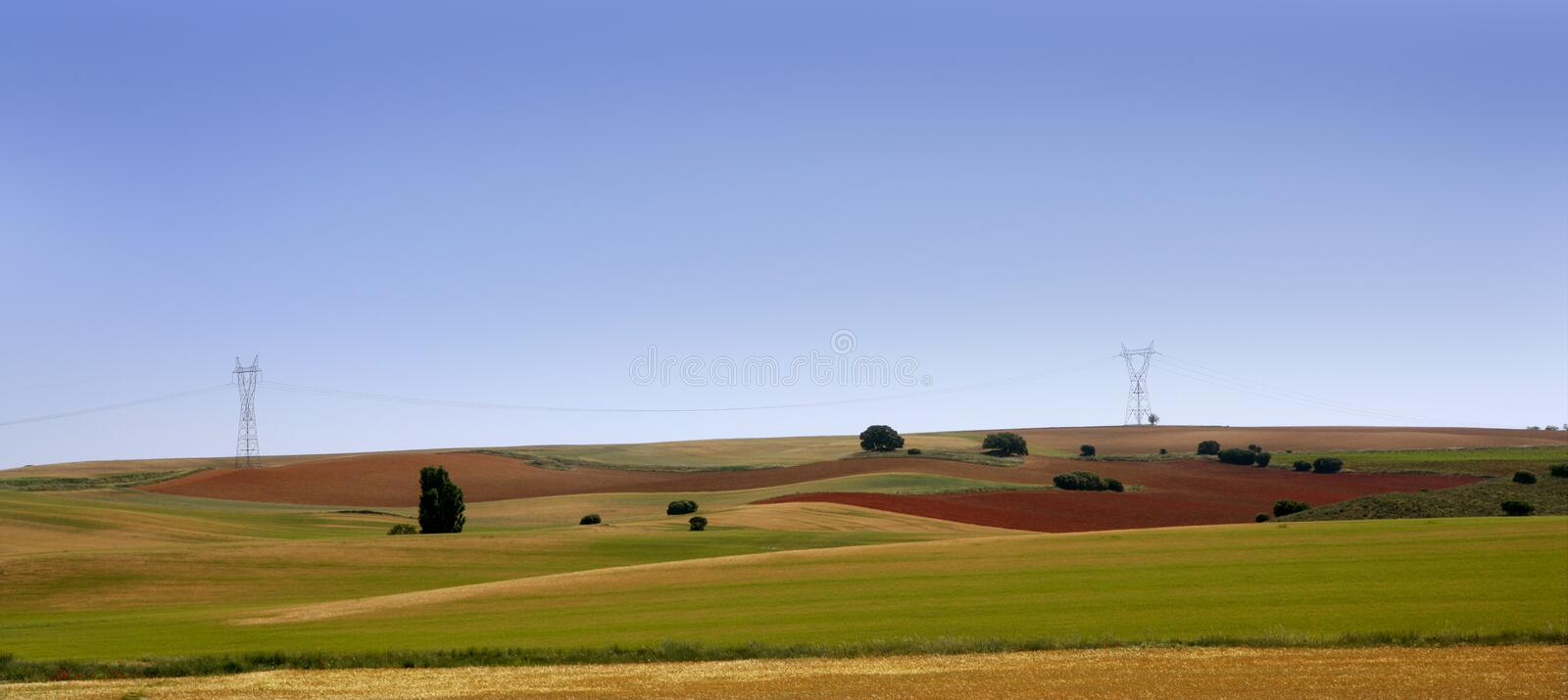 Golden and green cereal fields landscapes royalty free stock images