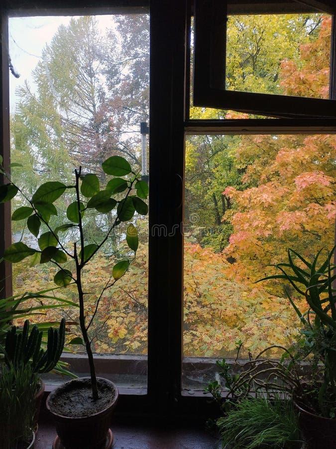 Golden-hösten royaltyfri foto