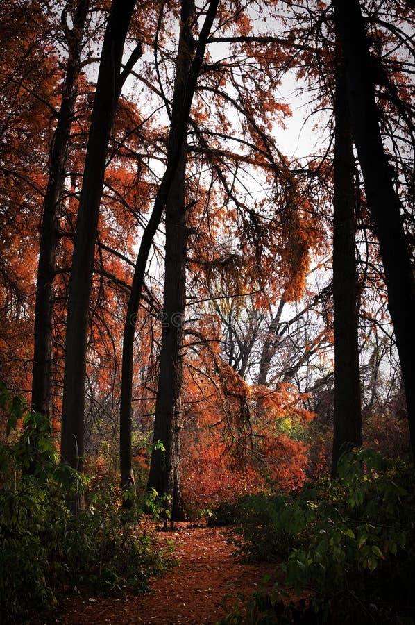 Golden-hösten fotografering för bildbyråer