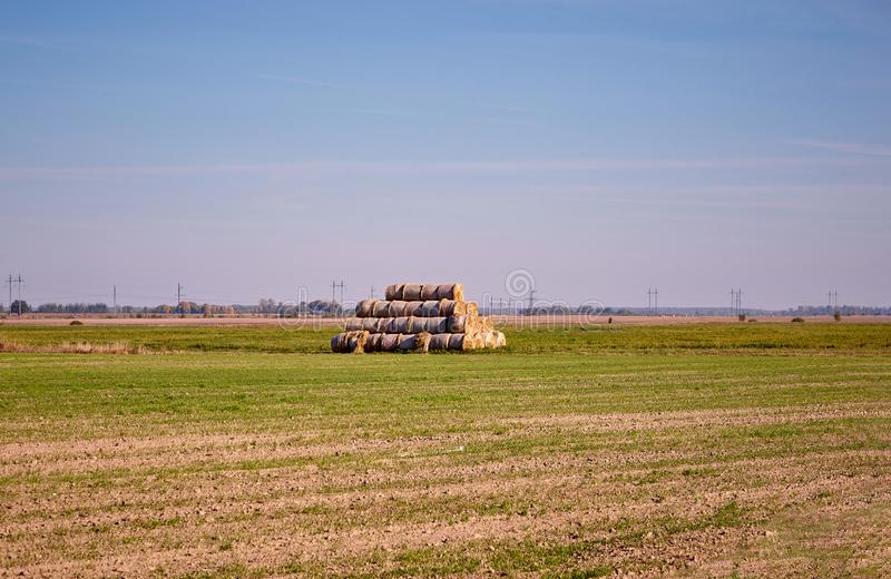 Golden Hay Bales in the countryside on a perfect sunny day royalty free stock image