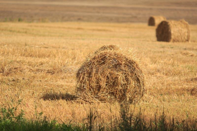 Golden Hay rolls royalty free stock photo