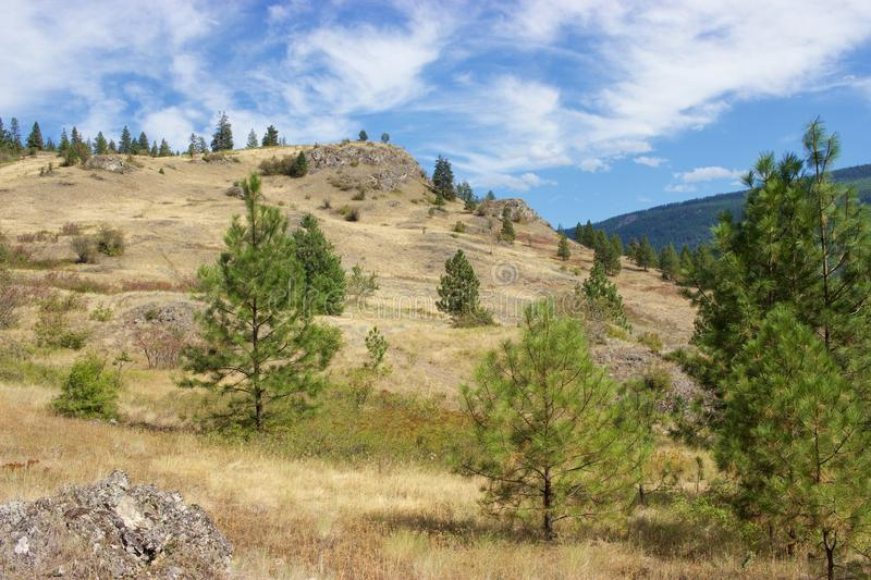 Golden hillside and trees, Kalamalka Lake Provincial Park, Vernon, Canada. A summertime view toward the lookout in Kalamalka Lake Provincial Park in Vernon, B.C royalty free stock images