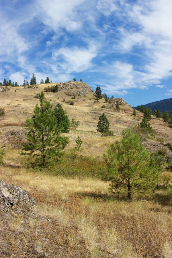 Golden hillside and trees, Kalamalka Lake Provincial Park, Vernon, Canada. A summertime view toward the lookout in Kalamalka Lake Provincial Park in Vernon, B.C stock images