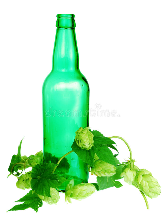 Golden hops on white royalty free stock photos