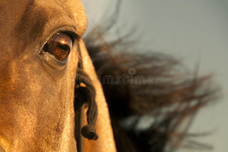 Golden horse of Turkmenistan stock photography