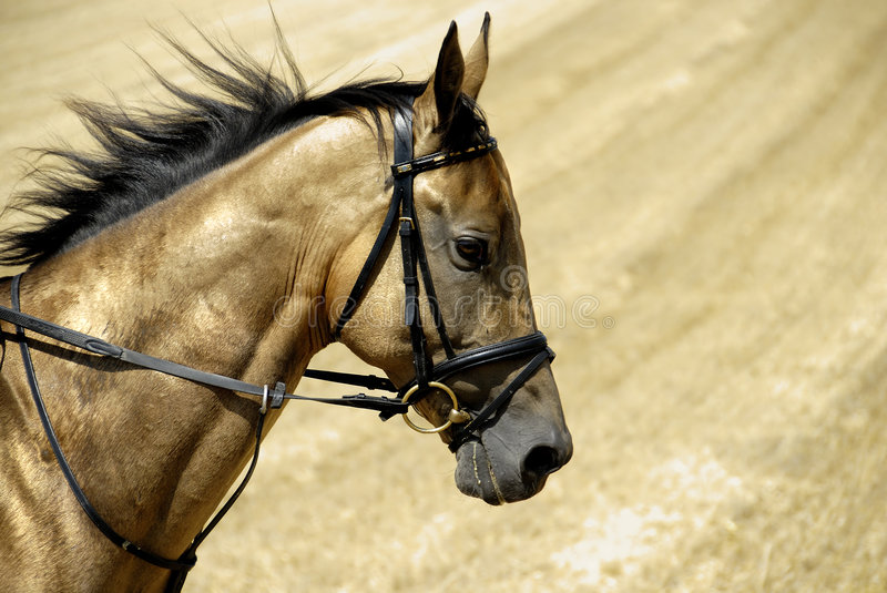 Golden horse of Turkmenistan royalty free stock photography