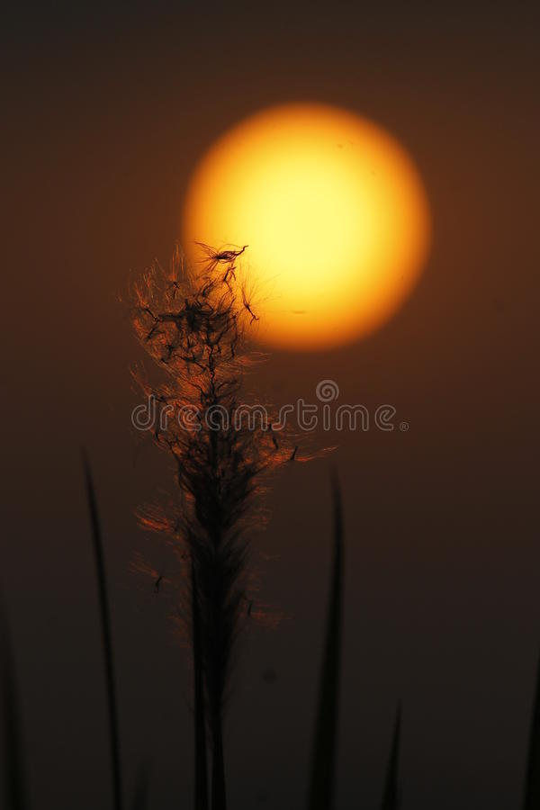 Golden Hour. A click during the golden hour royalty free stock images
