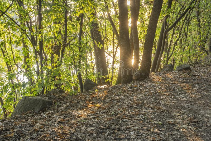 Golden hour in the forest. Morning golden hour in the woods near Lake Sovinac between Negotin and Zajecar royalty free stock photos