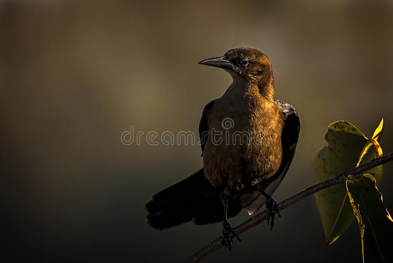 Golden Hour stock images